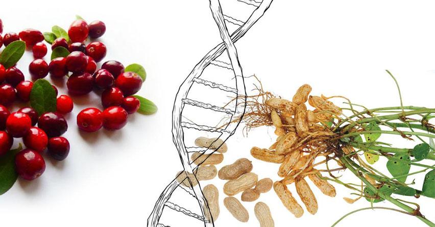 геном растений