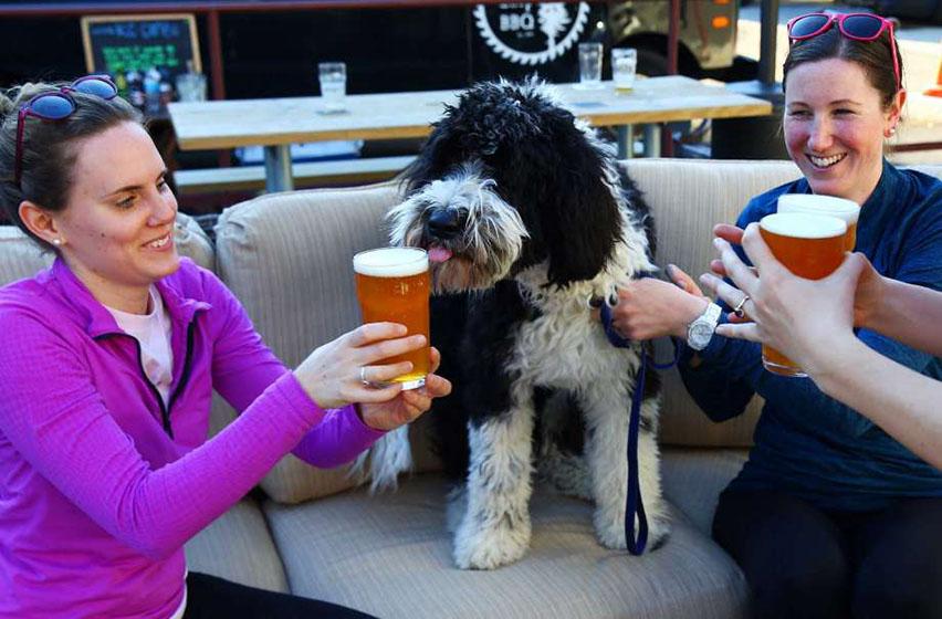 собака с пивом